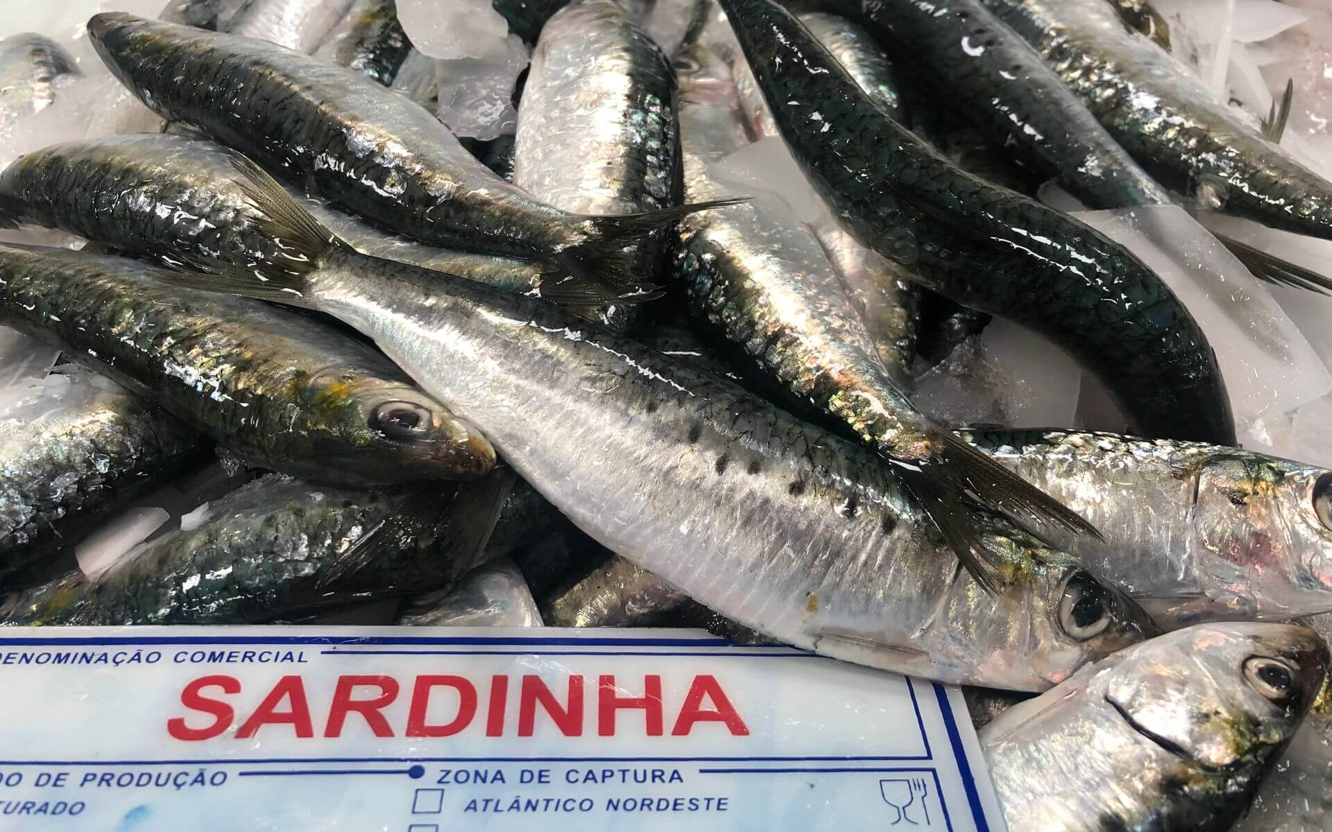 Mercado do Livramento Setubal Sardinha