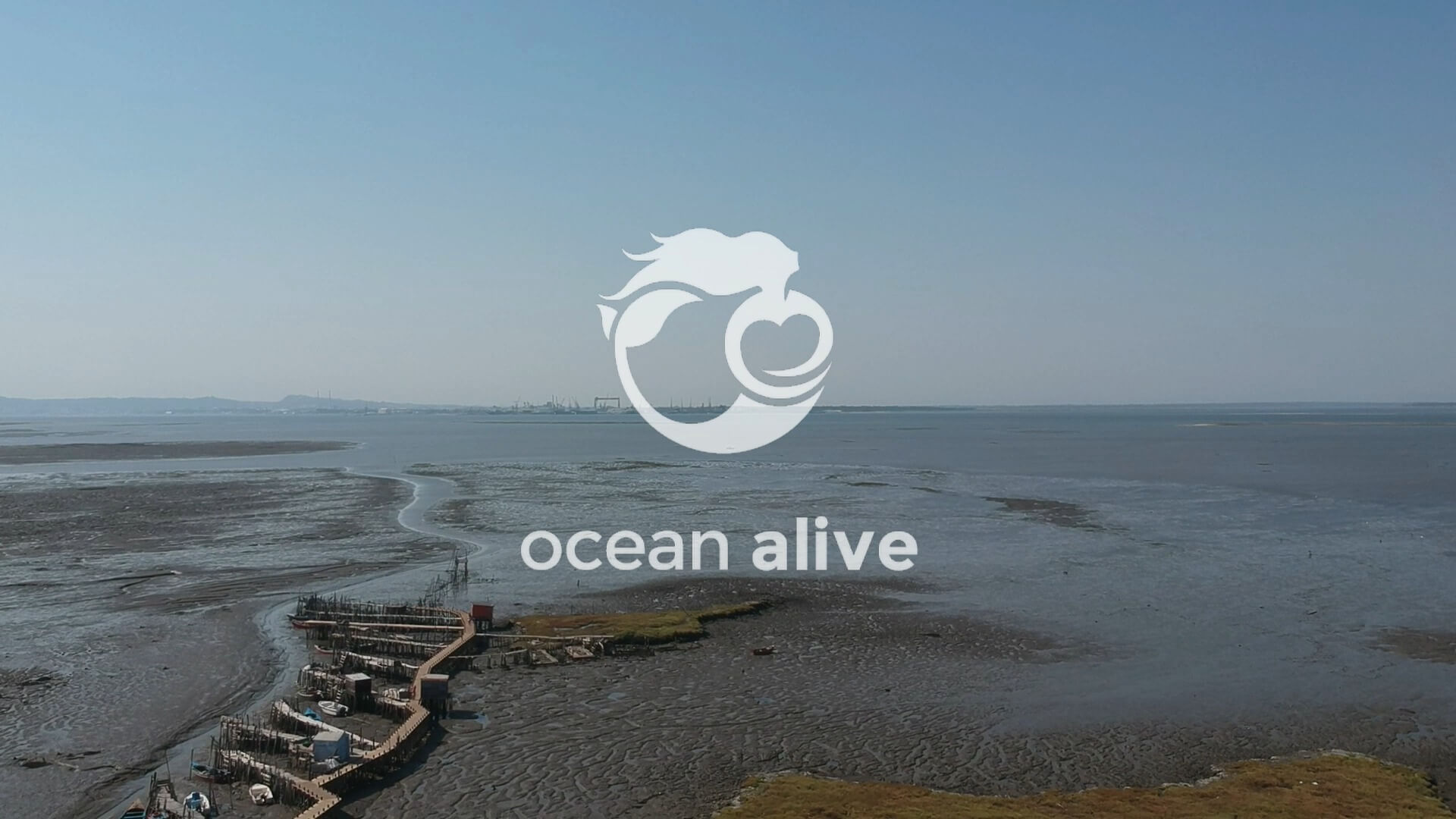 Ocean Alive - Estuario do Sado