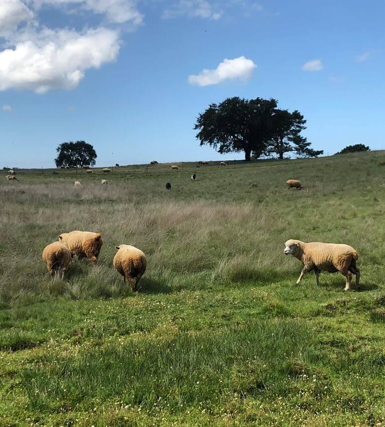 Natureza Agricultura Sustentabilidade Setubal Featured