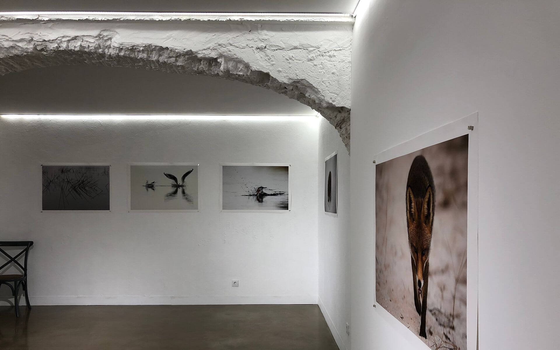 Galeria Lapso Setubal Header